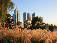 Melbourne, grass, city, federation square, trees, buildings.
